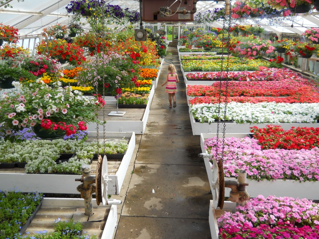 CHHS Bronswood Plant Sale 2015